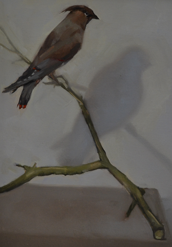 Pestvogel waxwing 26x35 cm Oil on canvas