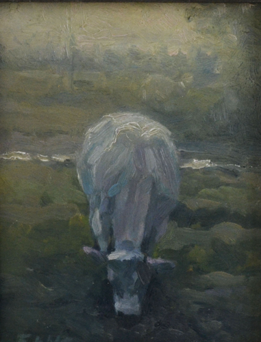 White cow 20 x25 Oil on Panel